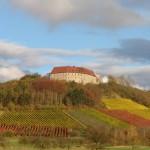 Weinbau-Schwarzer-Adler